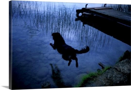 a-dog-jumping-into-lake-banyoles,1942676