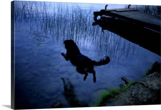 a-dog-jumping-into-lake-banyoles,1942676