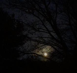The Moon was lovely last week!